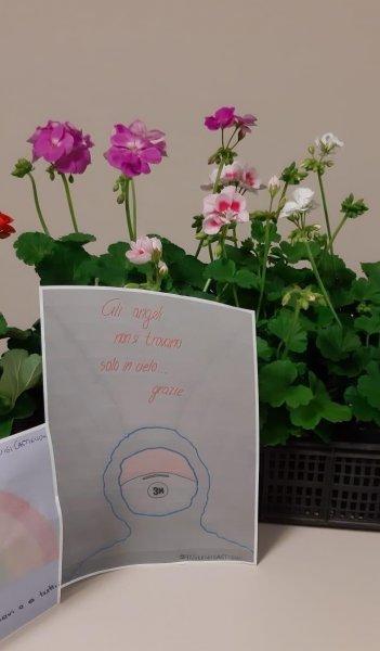 imm.-donazione-fiori3-FILEminimizer