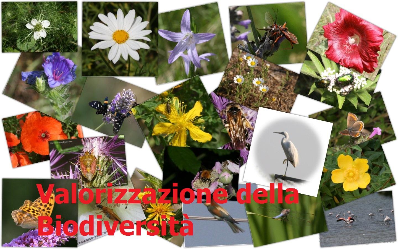 biodiversita1