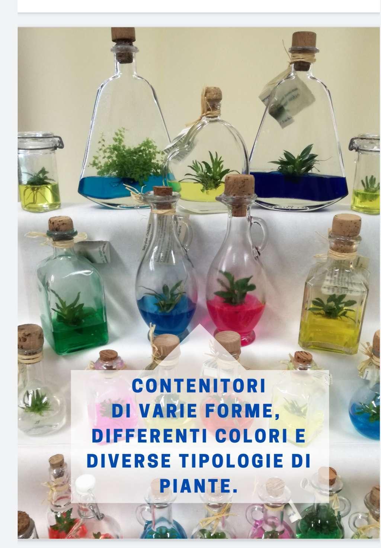 Vendita piante BABY PLANT